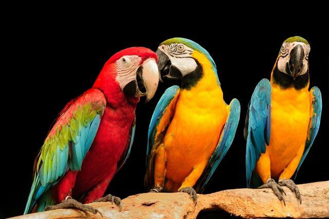 Поговорим? Или как научить попугая разговаривать!