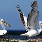 Птицы Дуная испытывают трудности из-за жары