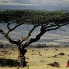 Масштабная засуха в Африке