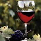 Алкоголь полезен для сердца