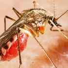 Электронный отпугиватель комаров или идеальное средство борьбы с крылатыми «кровопийцами»