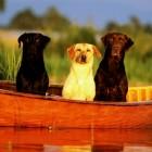 Лодка, как связующее звено друзей
