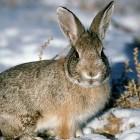 Охота на рябчиков и кроликов с пневматикой